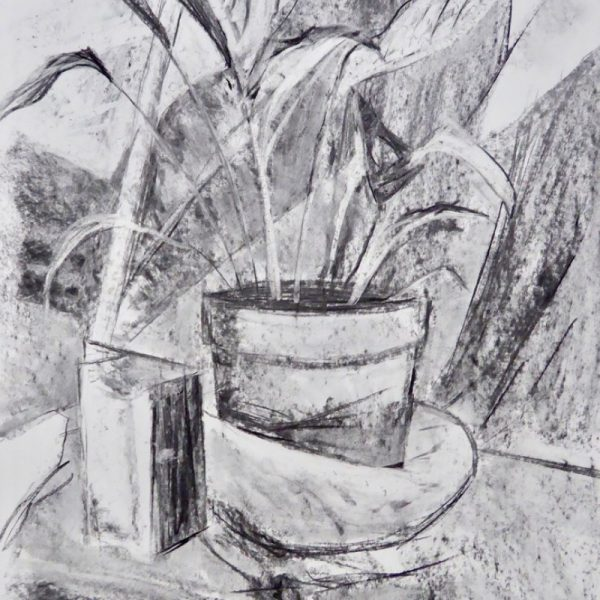 Pencil drawing of still life plant in pot